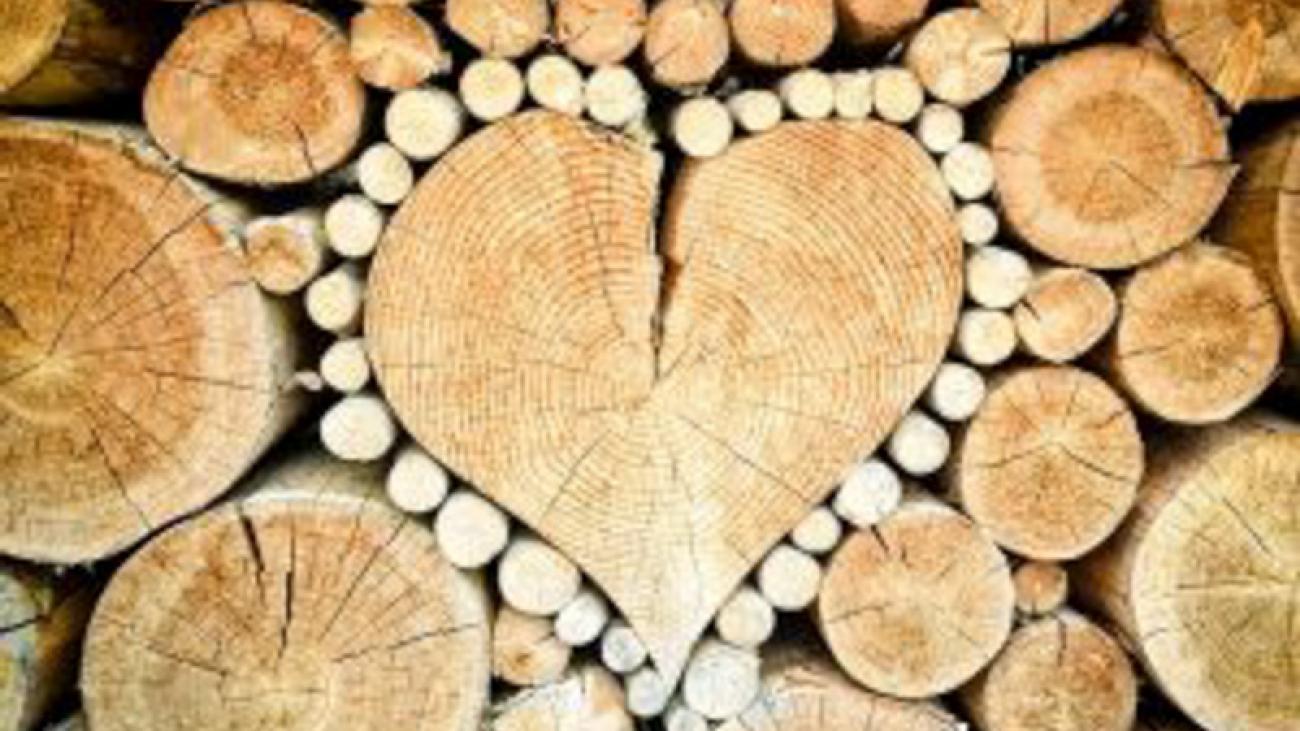 dsant360_biomasa_love-300x225